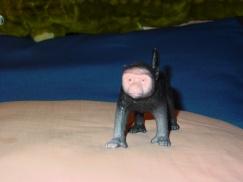 l'scimmia